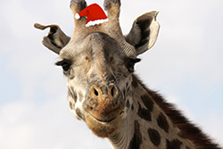 Holiday Giraffe