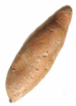 "Yam - 3 letter word for ""A Starchy staple of Africa"""