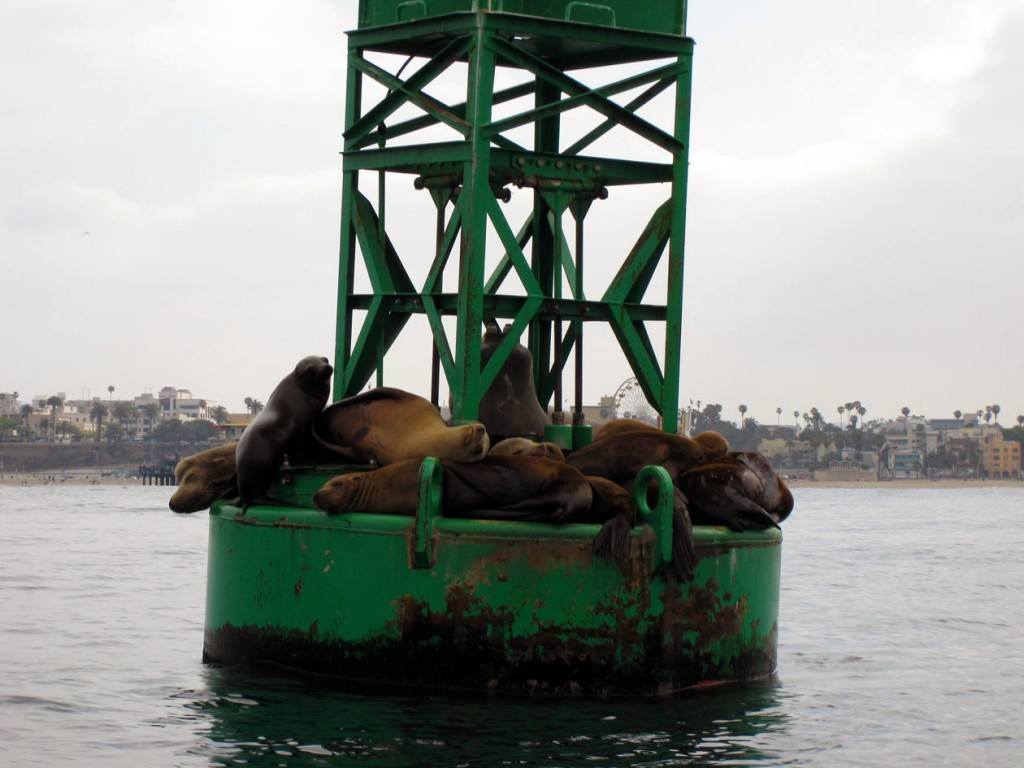 Santa Monica Sealions