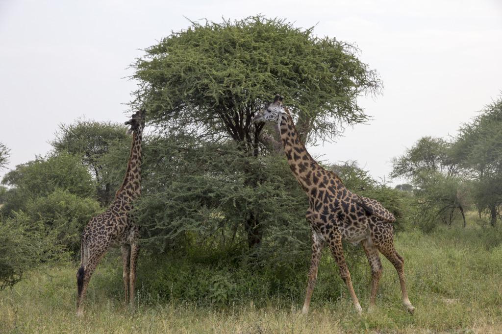 The Giraffes were my favorite!