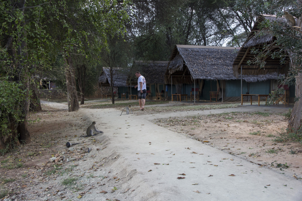 "A monkey chasing Jimmy near our ""tents"""