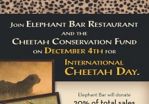 CCF-EB-International-Cheetah-Day-Flyer-featured