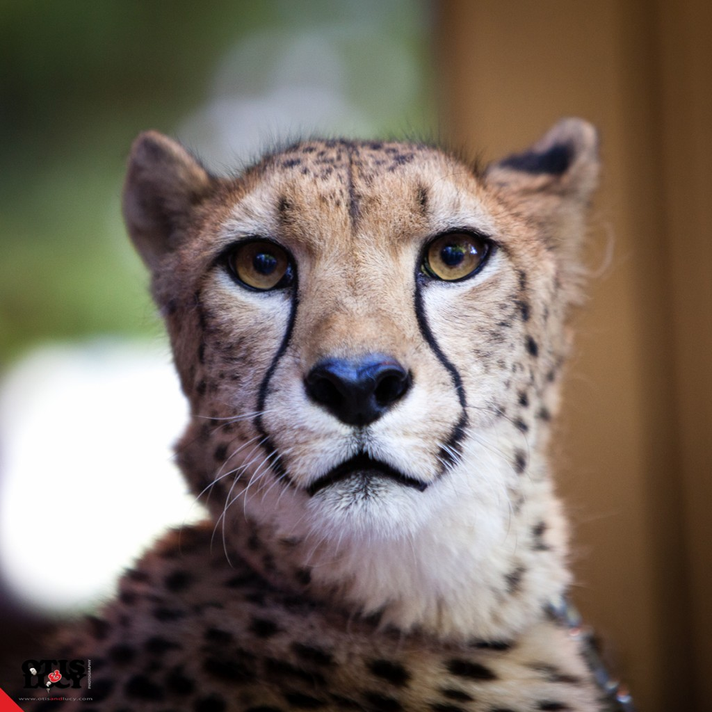 Cheetah Johari (photo credit: Andy Sheng)