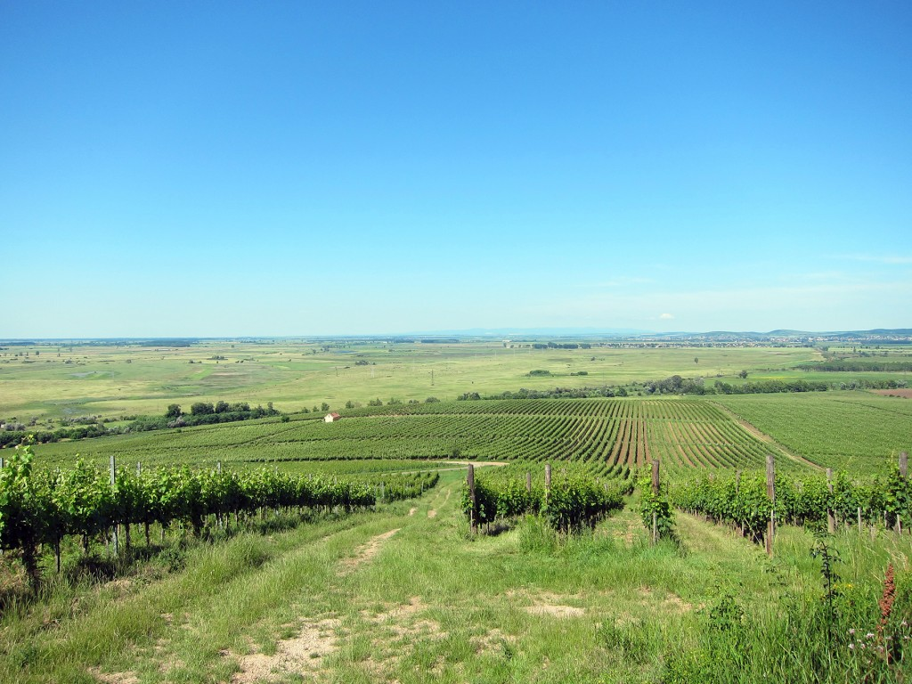 Vineyards of Tokaj