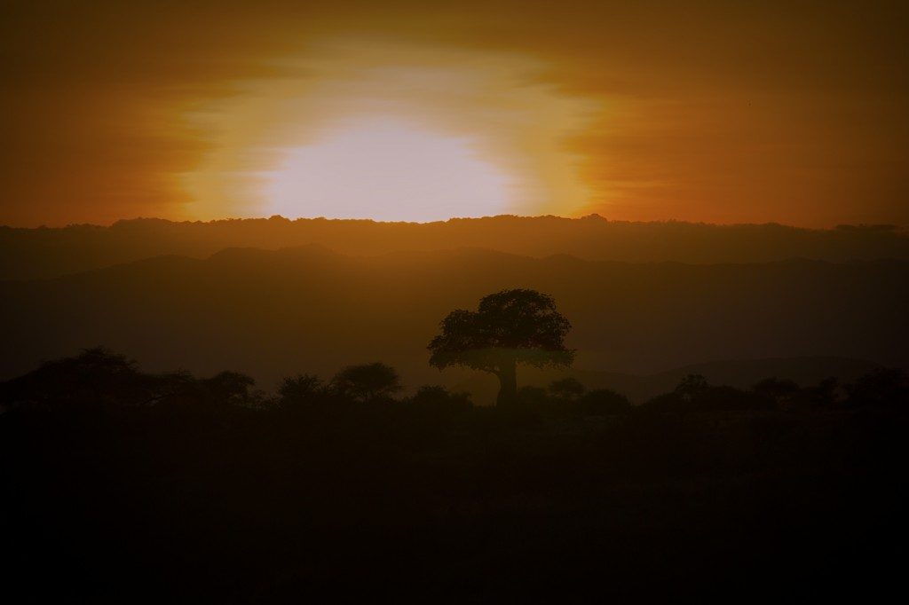 Sunset Over Baobob - By John Ealer - Nairobi - Kenya