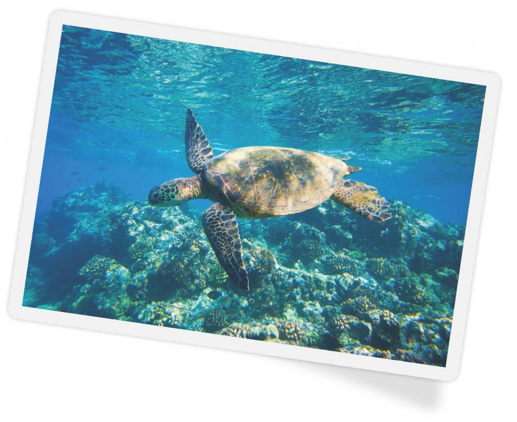 family vacation - sea turtle - diving
