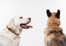 Adorn Your Dog With A Maasai Beaded Dog Collar