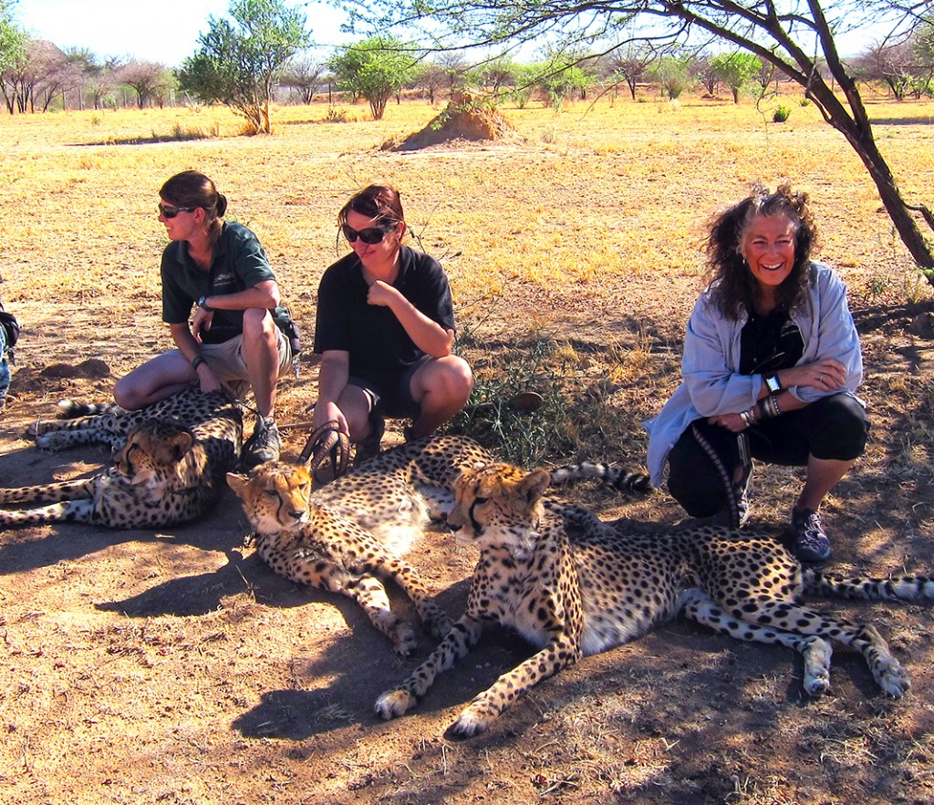 Tired Cheetahs In Namibia