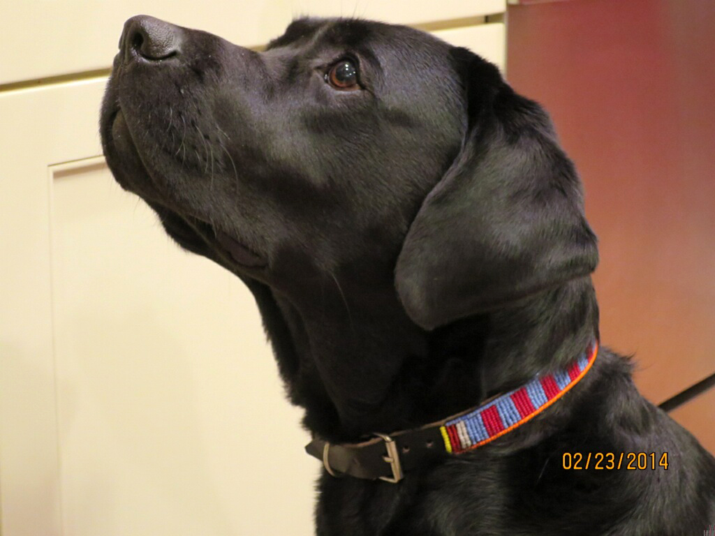 Briggs -  Dog Collars for Africa