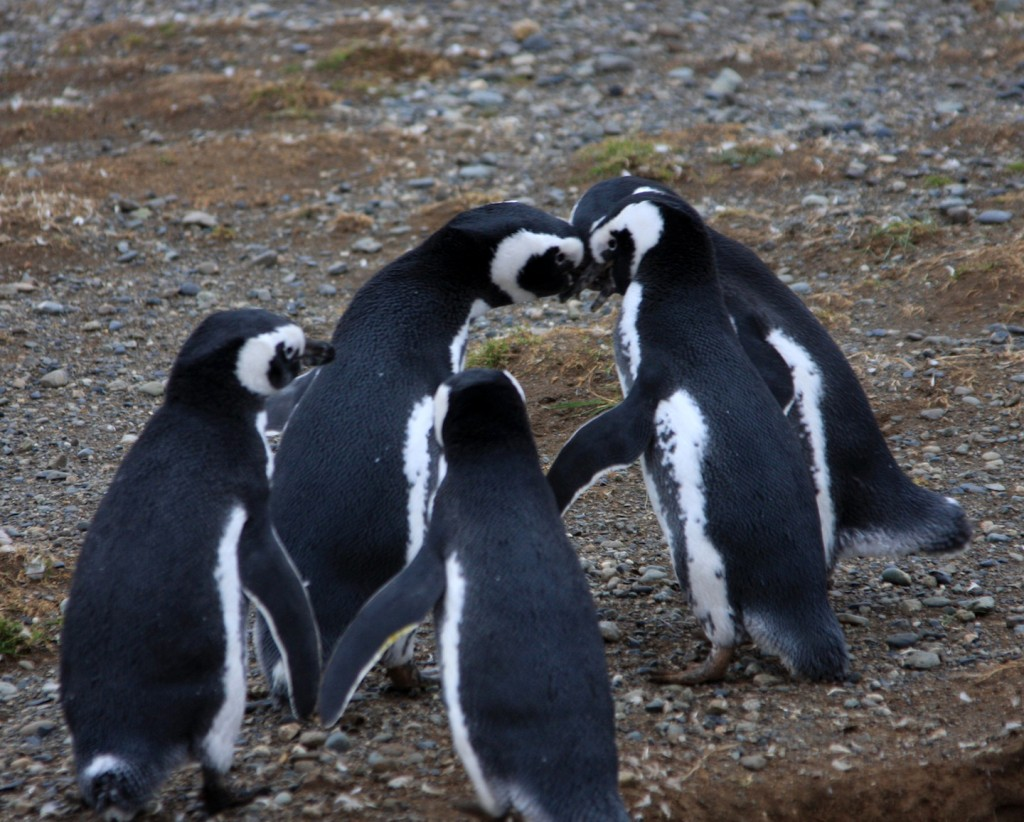 Penguin - Group Meeting