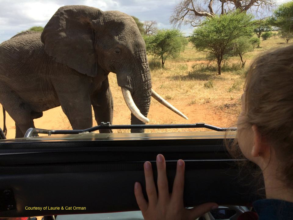 Up Close & Personal on an Infinite Safari Adventures Safari