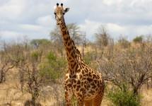 Tanzania 5 Fun Facts