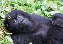 Rwanda 5 Fun Facts
