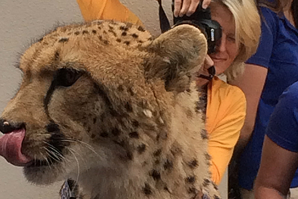 "4th Annual ""Meetah Cheetah"" – A Resounding Success"