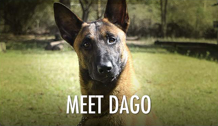 Dago the Sniffer Dog