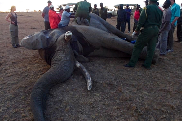 Elephant ER Rescue In the Bush