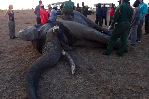 Elephant ER Rescue In the Bush