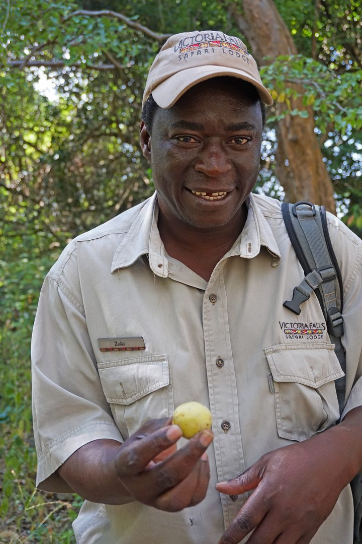 Zulu At Victoria Falls with Marula Fruit